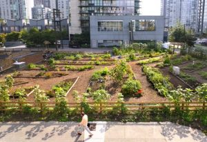urban-agriculture-vancouver-downtown